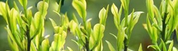7家川茶企业入选2013年度中国茶叶行业百强