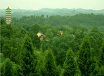 四川交响乐团乐手和资阳娃共奏《天空之城》