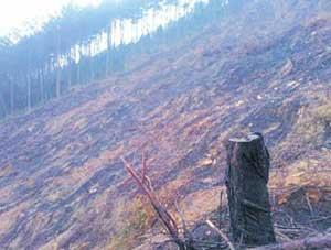 伐木引山火烧毁9亩山林 承包者被令补种树苗
