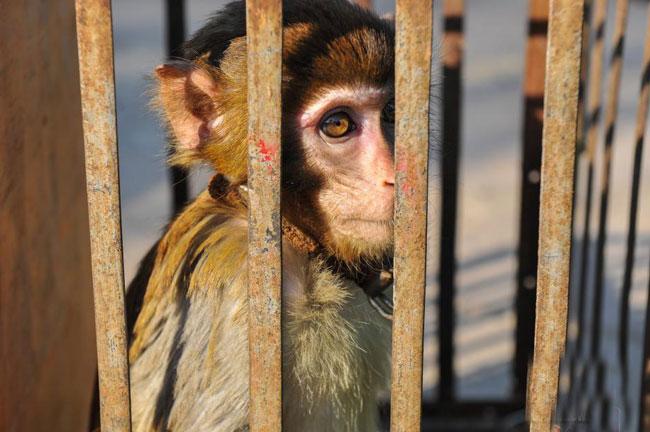 云南野生动物园放生120多只野生动物