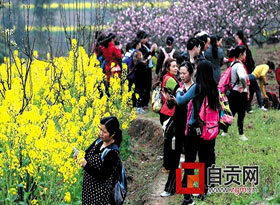 自贡春暖花开 正是一年赏花好时节