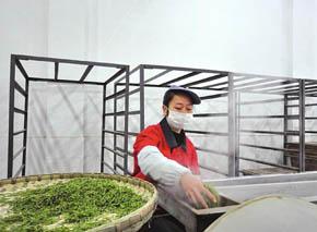 宜宾茶企弃奢华风 今年主打大众茶
