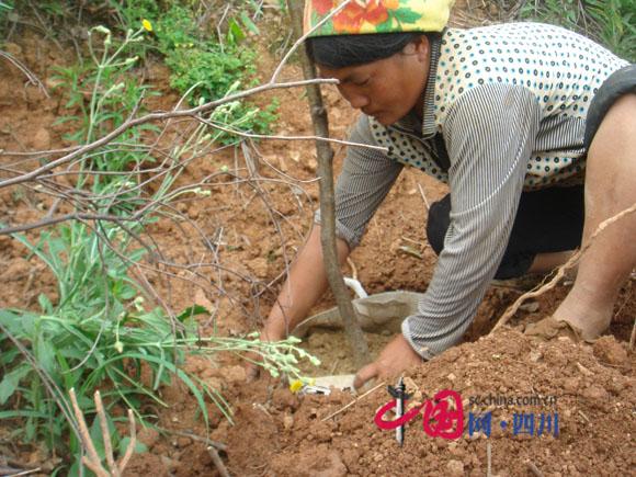 苗木栽植树坑深度