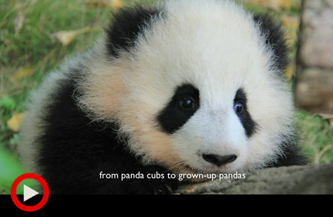 大熊猫家园 英文版
