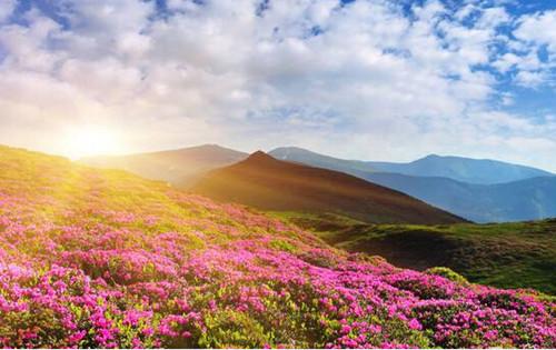 光雾山杜鹃花节将於4月1日至5月25日在巴中市南江县