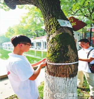 """近日,西华师范大学美术学院学生开展了以""""为大树戴名片&rdquo"""