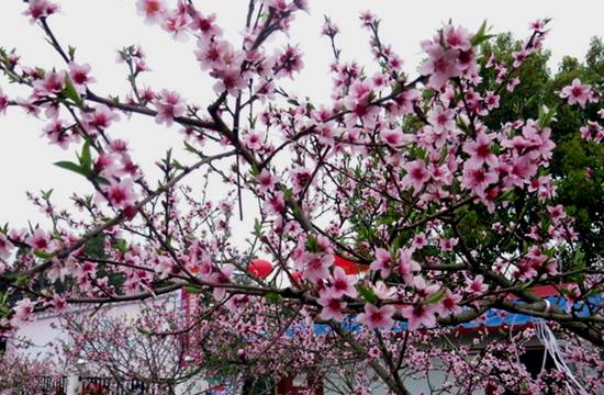 射洪县第十八届桃花节开幕式安保掠影