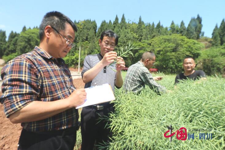 船山区2015年中央财政产油大县奖励资金集中使用项目区油菜喜获高产