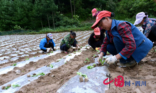 毛坝村农户的日子越过越好