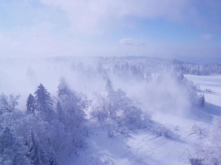 吉林延边大片树林形成雾凇景观