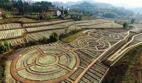 總投資50億元 嘉陵建設萬畝農業産業園