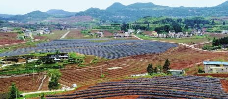 3萬畝柑橘産業園 助南充儀隴千余貧困戶增收