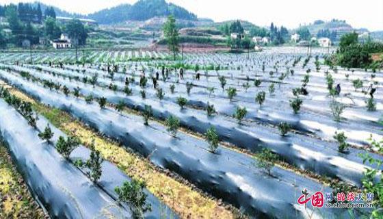 http://www.ncchanghong.com/nanchongxinwen/15496.html