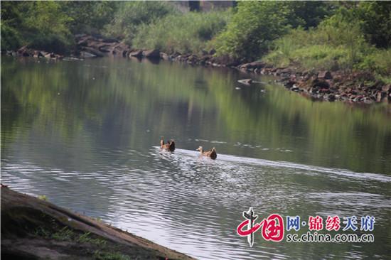 """仁寿县农旺镇为河流脱下""""绿衣""""全面清理村内积存垃圾"""