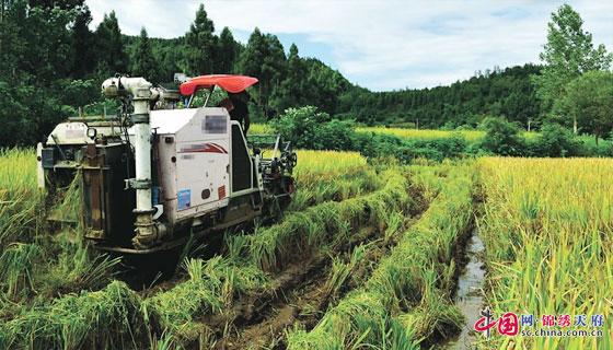 """玉龍山村何福勤家的稻田裏,聯合收割機正在作業   近日,南部縣盤龍鎮玉龍山村何福勤家的稻田裏,轟隆隆的機器聲響個不停,隨著一束束水稻被聯合收割機""""吞""""進去,金黃的谷粒掉入早已準備好的口袋中。不到30分鐘,何福勤家一塊面積約半畝的水稻就被""""消滅""""得乾乾淨淨。   何福勤的兒子兒媳都在外地上班,家 只有老兩口。勤勞的何福勤不僅種了自家的田地,還種了別人家的撂荒田,今年共種植水稻近30畝。由於缺少勞動力,以前為收割稻穀吃盡了苦頭。""""收割機可幫了我"""